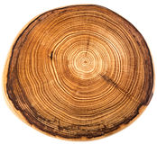 Crossection van een boomboomstam Royalty-vrije Stock Afbeeldingen