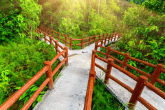 Crossed bridges in tropical forest. Crossed bridges in green tropical forest. Emerald blue Pool, Krabi province, Thailand Royalty Free Stock Images