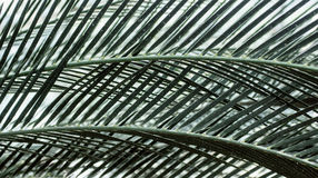 Crossed palm leaves background. Botany, travel concept. Text space Stock Image