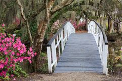 Crossing at Charleston SC Magnolia Garden in Spring. Pedestrian crossing bridge with colorful spring azalea flowers in bloom at Magnolia Plantation and Gardens stock photo