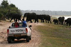 Crossing elephants Stock Photo