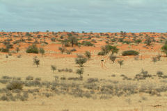 Crossing the Kalahari Wilderness Namibia Stock Photos