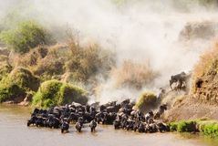 Crossing the Mara River Stock Photos