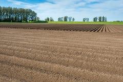 Crossing potato ridges after the rain Royalty Free Stock Photo