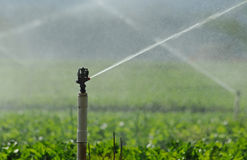 Crossing spurts of sprinklers Stock Photos