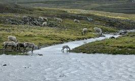 Crossing the Stream Stock Photo