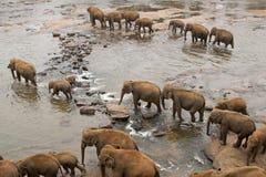crossingelefantflod Arkivfoton