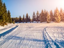 Crossroad of cross country skiing tracks in winter forest landscape on sunny day, Jizera Mountains, Czech Republic Stock Photos