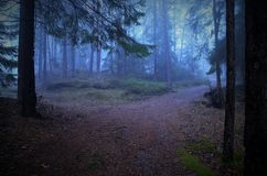 Crossroad in foggy forest in autumn stock photography