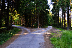 Crossroad in forest Stock Photos