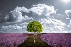 Crossroad in lavender meadow. And with tree alone Stock Photos