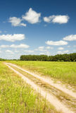 Crossroad throught the vibrant field Stock Image