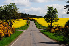 Crossroads. Between rape seed fields and gorse Royalty Free Stock Images