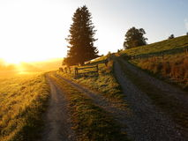 Free Crossroads By Sunrise Country Road Forks Into Two Royalty Free Stock Images - 50347259