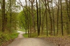 Crossroads of dirt tracks in the springtime woods, Stuttgart. A crossroads of dirt roads in springtime woods in  park near town, shot  at Stuttgart, Baden Stock Images