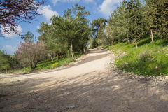 Crossroads in the forest stock photography