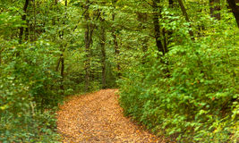 Crossroads In The Forest Royalty Free Stock Photography