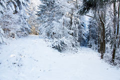 Crossroads of light and darkness. Winter road in covered snow fo Stock Image