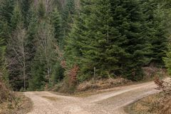 Crossroads in the middle of the forrest. And high firs stock photography