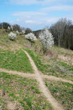 Crossroads pathways between flowering shrubs Royalty Free Stock Photo