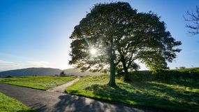 Crossroads with sun shining through tree. A Crossroads of a main road and smaller less traveled road with the sun shining through a tree royalty free stock photography