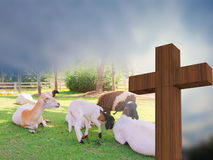 Crosss with a group of sheeps, lamb of god, 3d rendering. Crosss with a group of sheeps, christain concept, lamb of god, 3d rendering Royalty Free Stock Photos