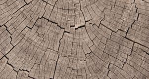 Crosssection of Exposed Tree Trunk Rings Royalty Free Stock Photography