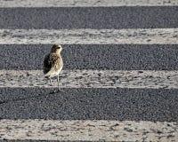 Crosswalk bezpieczeństwo Zdjęcia Stock