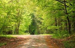 Crossway in einem Buchenbaumwald Stockfotografie