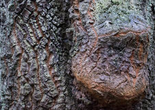 Crosta dell'albero immagini stock libere da diritti