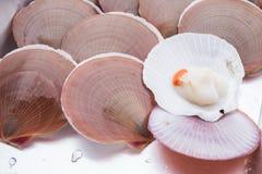 crostacei Fotografie Stock