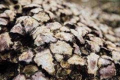 Crostacei delle coperture di struttura Molluschi delle coperture del fondo sulla spiaggia nelle coperture chiuse Immagine Stock Libera da Diritti
