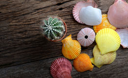 Crostacei variopinti e piccolo cactus Fotografia Stock Libera da Diritti