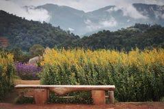 Crotalaria foto de stock royalty free