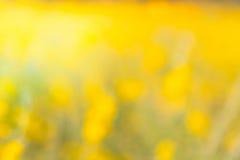 Crotalaria Imagenes de archivo