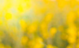 Crotalaria Fotografía de archivo