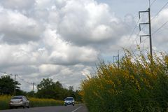 Crotalaria flower on rural roads with cars. Stock Photography