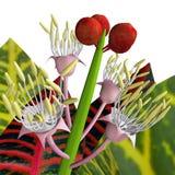 Croton 3D Foto de Stock Royalty Free