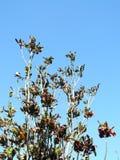 Croton de jardin Photographie stock libre de droits
