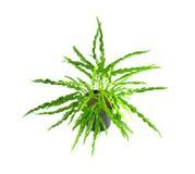 Croton del jardín Imágenes de archivo libres de regalías