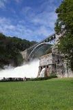 Croton tama Fotografia Royalty Free