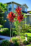 Croton varieties. Cordyline Red Sister plant and croton varieties, Taken in Florida royalty free stock photo