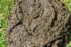 Crottes de vache à bouse de vache photos libres de droits