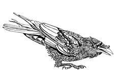 Crouched raven outline. An outlined illustration of a crouched raven with in a fighting mood Stock Photo