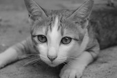 Crouching Cat Stock Images
