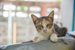 Crouching cat. Young cat is crouching on the top feel free and peace Stock Images