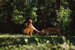Crouching girl pulling branch with her dog royalty free stock photography