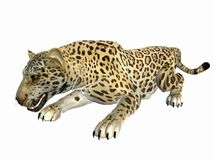 Crouching Jaguar Stock Photos