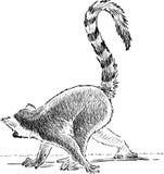 Crouching lemur Stock Images