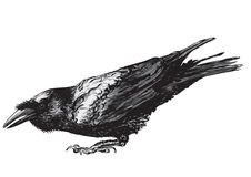 Crouching raven. A vectorized drawing of a crouching raven with it's beak open Stock Images